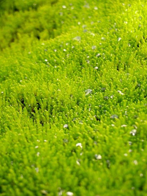Vibrant green moss