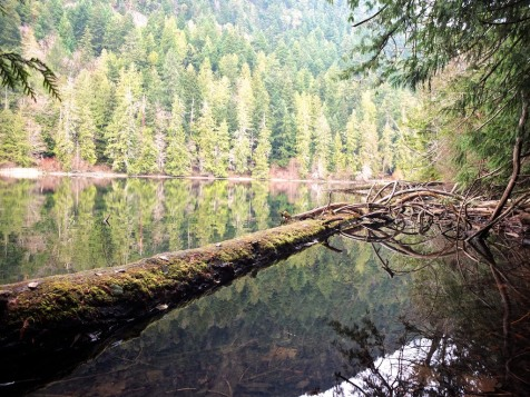 Cathedral Grove Reflection