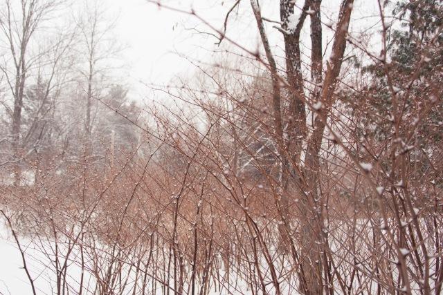 Trees, Upstate New York
