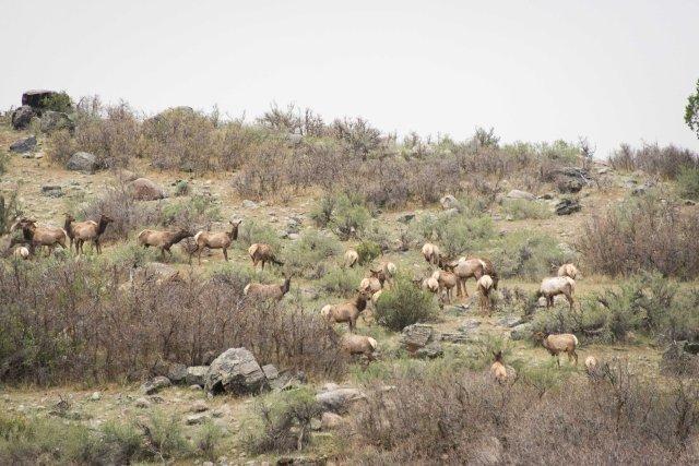 Elk, Colorado