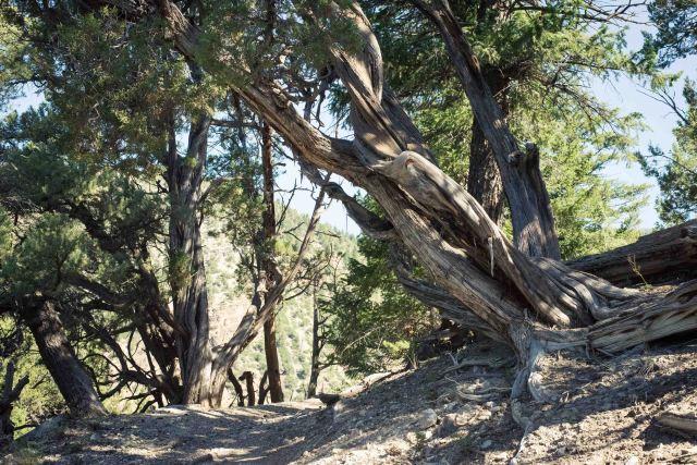 Boy Scout Trail