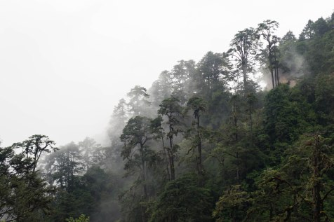 Foggy Forest, Bhutan