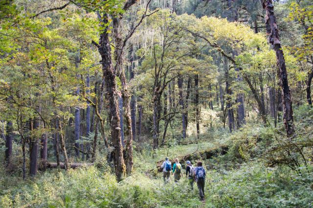 Beautiful forest, Bumthang Cultural Trek Bhutan