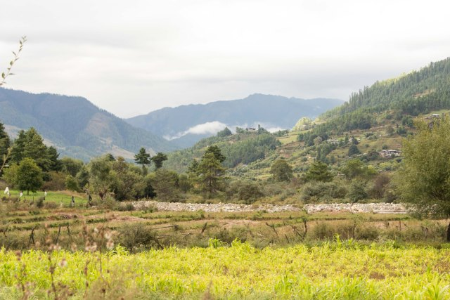 Farming fields, Bumthang, Bhutan