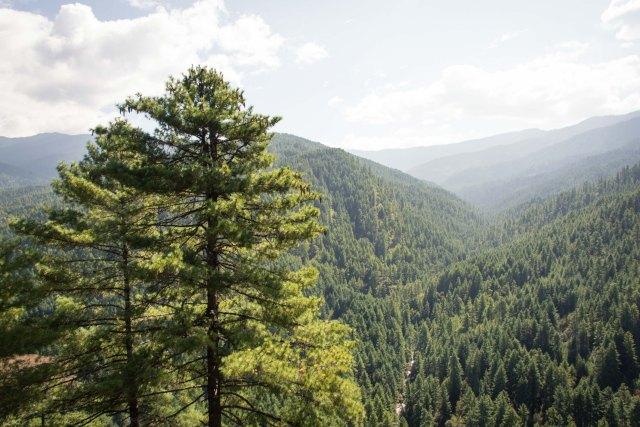Forest, Bhutan