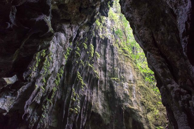 Cave wall, Mulu National Park