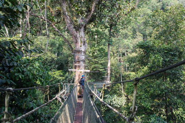 Canopy walk, Malaysian Borneo