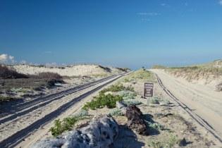 Sandy road and dunes along Cape Cod shore