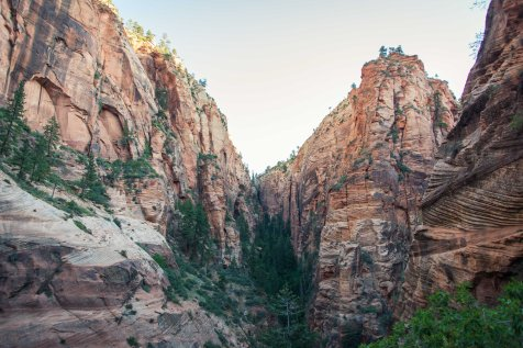 Rock layers and trees in Zion National Park