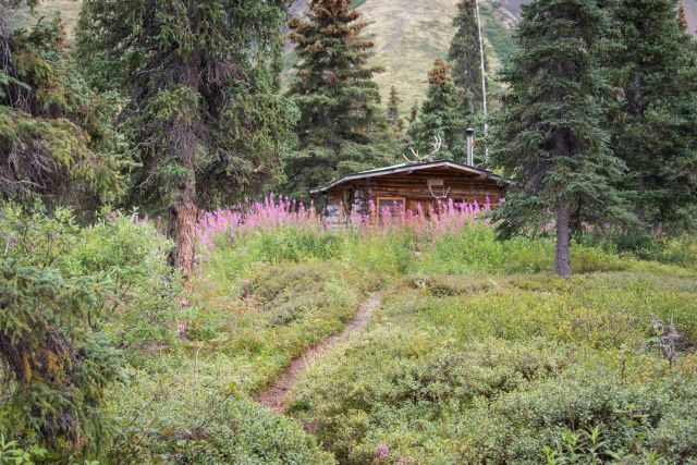a wood cabin in the forest with fireweed