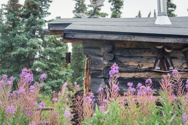a cabin with boots hanging to dry surrounded by fireweed