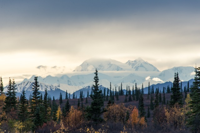 Denali in evening light with clouds and trees in the foreground